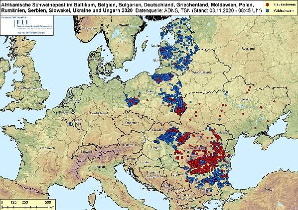 Африканская чума свиней продолжает распространяться в Европе: в немецкой Саксонии выявлен новый очаг вируса